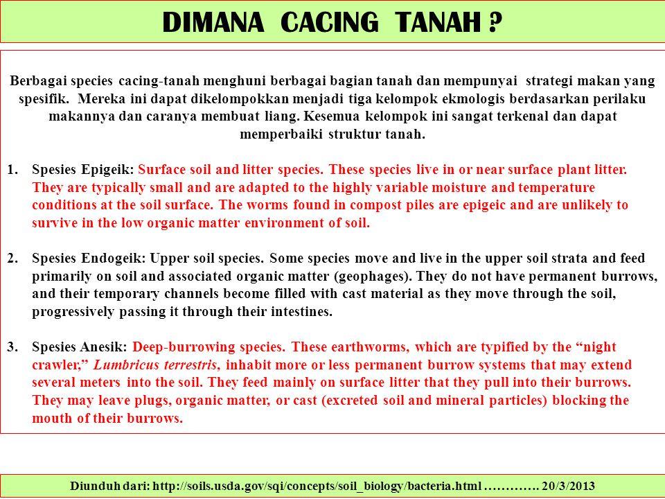 Berbagai species cacing-tanah menghuni berbagai bagian tanah dan mempunyai strategi makan yang spesifik. Mereka ini dapat dikelompokkan menjadi tiga k