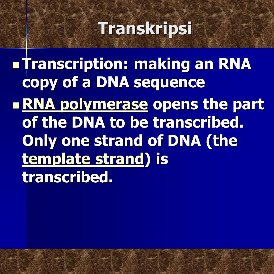 Transkripsi Transcription: making an RNA copy of a DNA sequence Transcription: making an RNA copy of a DNA sequence RNA polymerase opens the part of the DNA to be transcribed.
