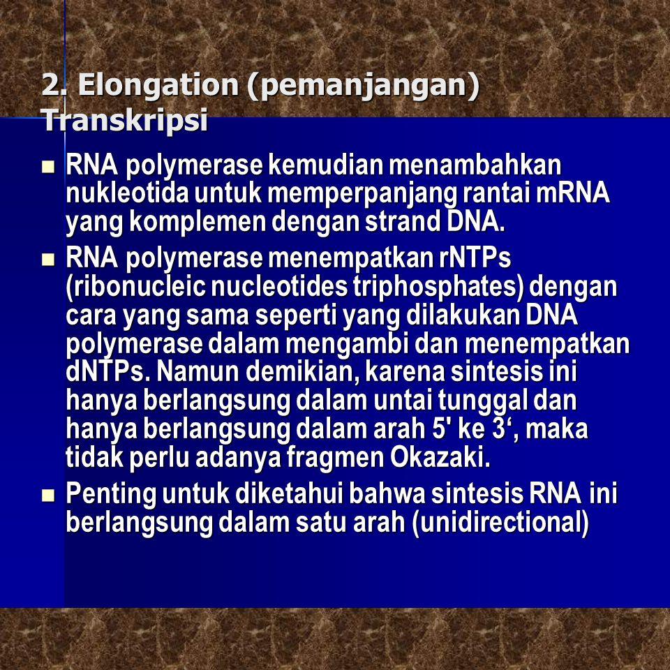 2. Elongation (pemanjangan) Transkripsi 2. Elongation (pemanjangan) Transkripsi RNA polymerase kemudian menambahkan nukleotida untuk memperpanjang ran