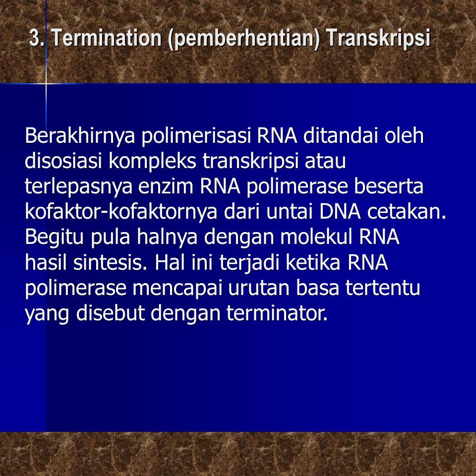 Berakhirnya polimerisasi RNA ditandai oleh disosiasi kompleks transkripsi atau terlepasnya enzim RNA polimerase beserta kofaktor-kofaktornya dari unta