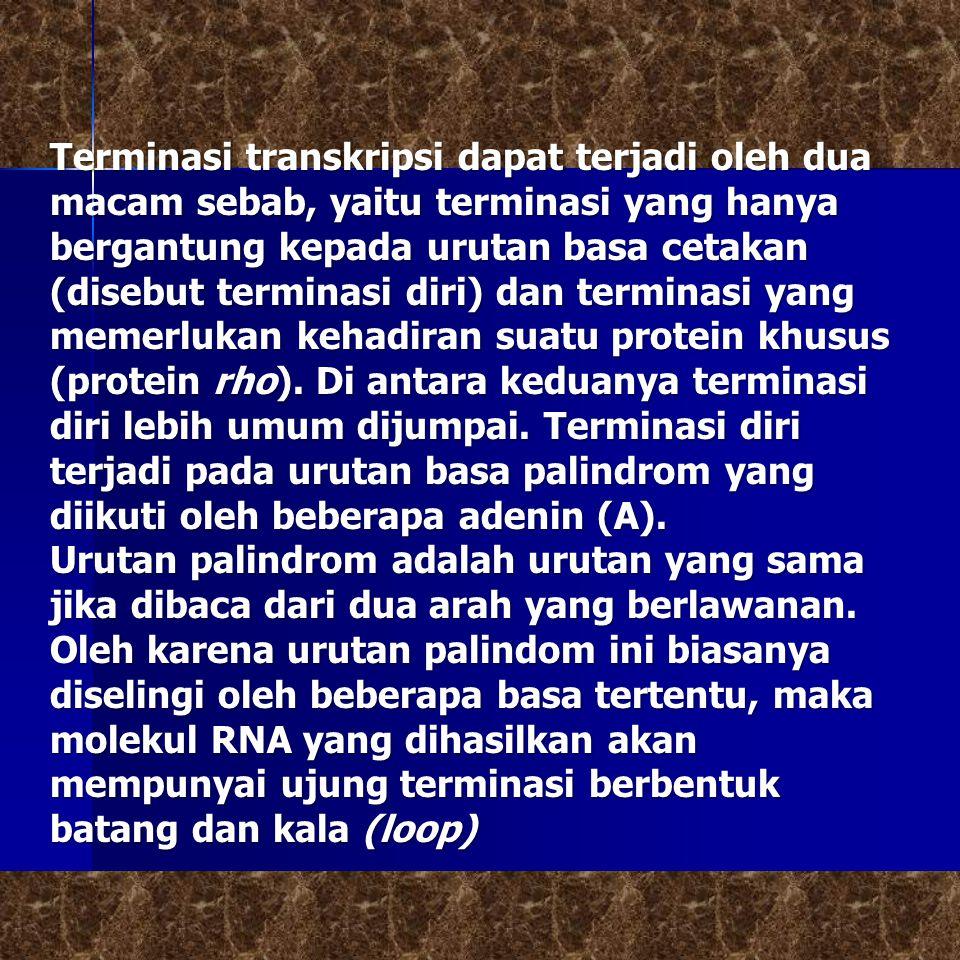 Terminasi transkripsi dapat terjadi oleh dua macam sebab, yaitu terminasi yang hanya bergantung kepada urutan basa cetakan (disebut terminasi diri) da