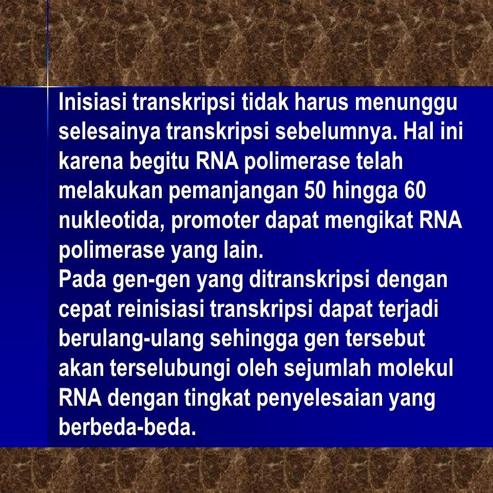 Inisiasi transkripsi tidak harus menunggu selesainya transkripsi sebelumnya. Hal ini karena begitu RNA polimerase telah melakukan pemanjangan 50 hingg