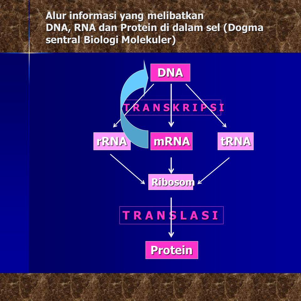 Alur informasi yang melibatkan DNA, RNA dan Protein di dalam sel (Dogma sentral Biologi Molekuler) DNA T R A N S K R I P S I mRNArRNAtRNA Ribosom T R