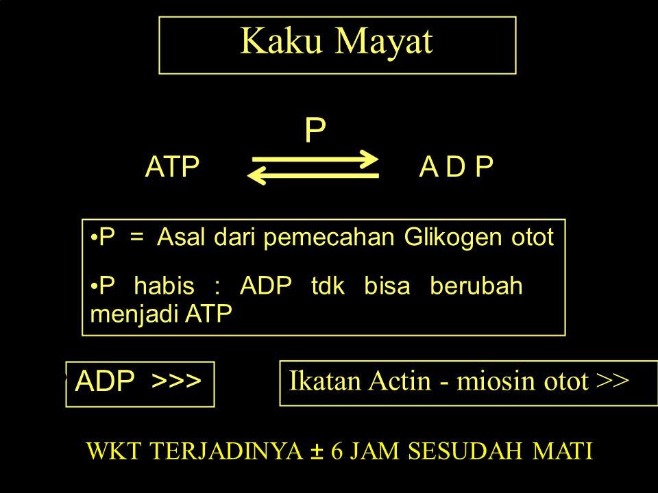 Kaku Mayat P ATPA D P P = Asal dari pemecahan Glikogen otot P habis : ADP tdk bisa berubah menjadi ATP ADP >>> Ikatan Actin - miosin otot >> WKT TERJA
