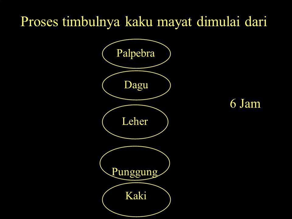 Proses timbulnya kaku mayat dimulai dari Palpebra Dagu 6 Jam Leher Punggung Kaki