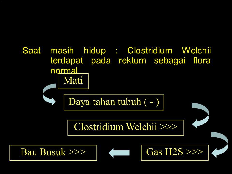 Mikro organisme Clostridium Welchii Saat masih hidup : Clostridium Welchii terdapat pada rektum sebagai flora normal Mati Daya tahan tubuh ( - ) Clost