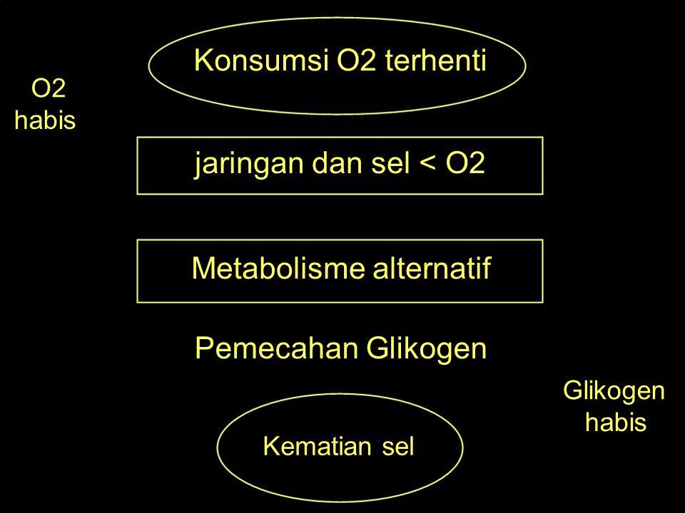 Konsumsi O2 terhenti O2 habis jaringan dan sel < O2 Metabolisme alternatif Pemecahan Glikogen Glikogen habis Kematian sel