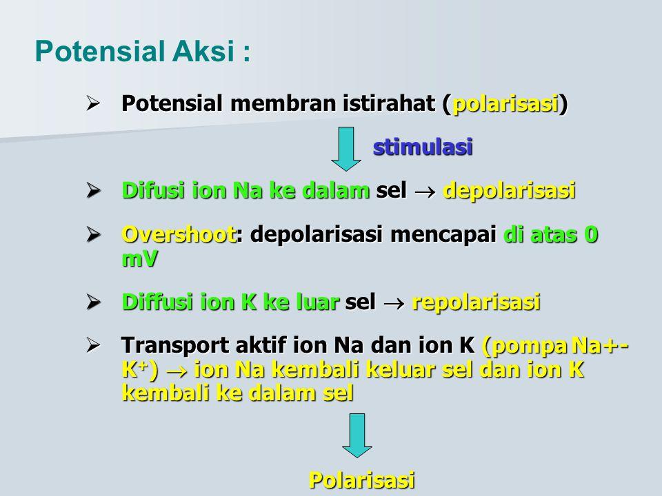 polarisasi  Potensial membran istirahat (polarisasi) stimulasi  Difusi ion Na ke dalamdepolarisasi  Difusi ion Na ke dalam sel  depolarisasi  Ove