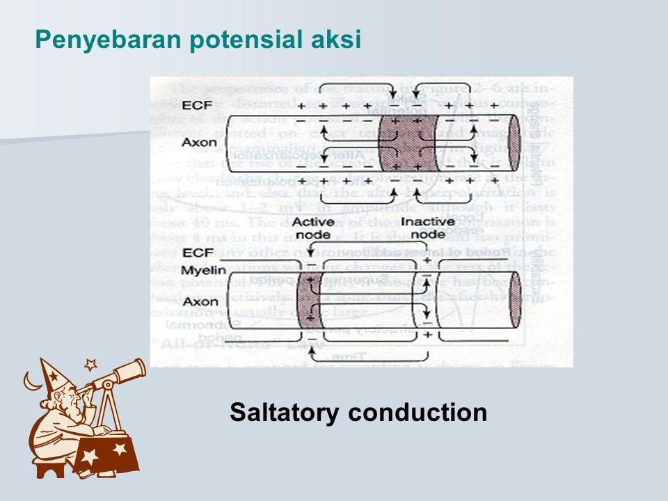 Penyebaran potensial aksi Saltatory conduction