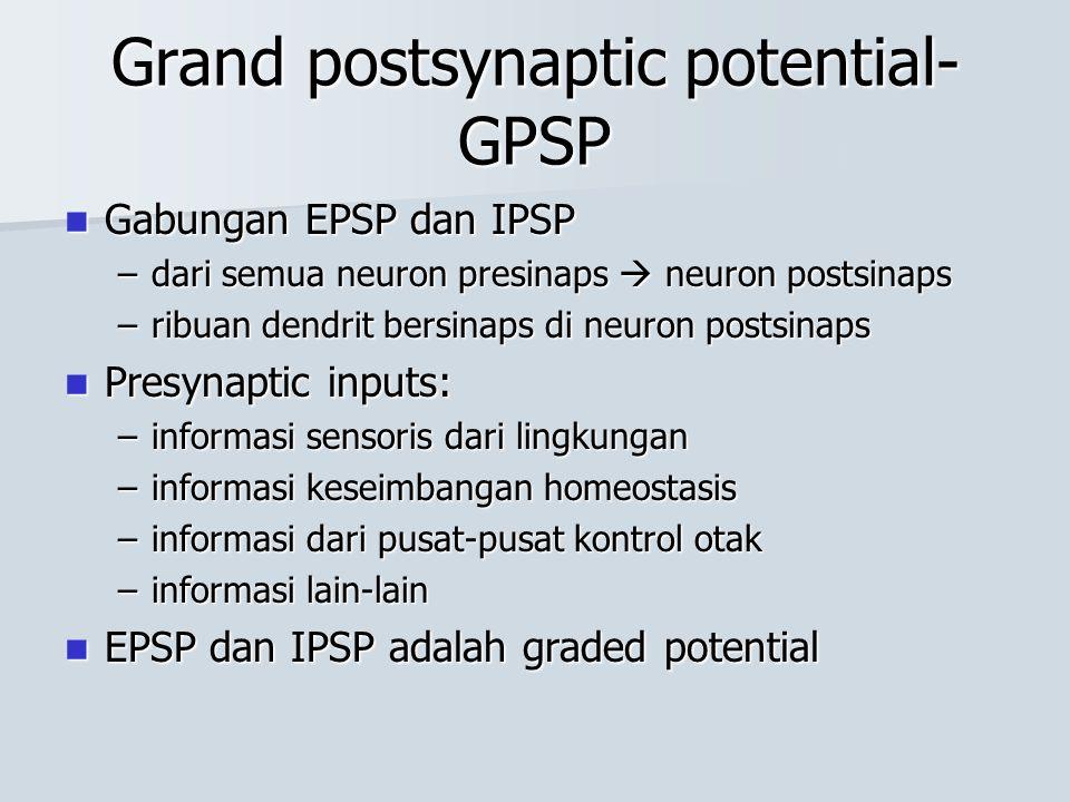 Grand postsynaptic potential- GPSP Gabungan EPSP dan IPSP Gabungan EPSP dan IPSP –dari semua neuron presinaps  neuron postsinaps –ribuan dendrit bers