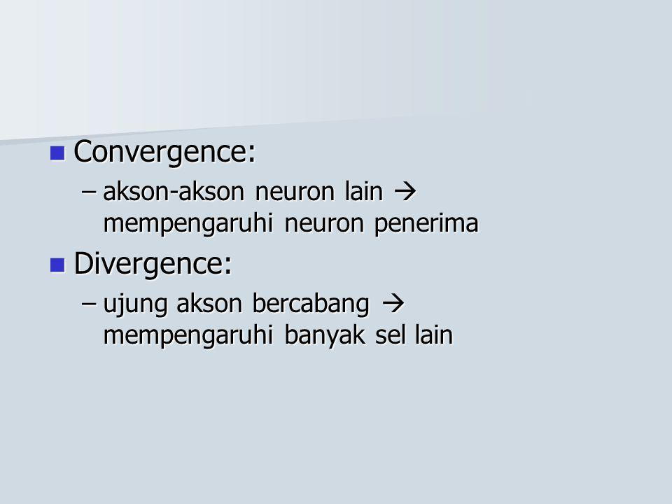 Convergence: Convergence: –akson-akson neuron lain  mempengaruhi neuron penerima Divergence: Divergence: –ujung akson bercabang  mempengaruhi banyak
