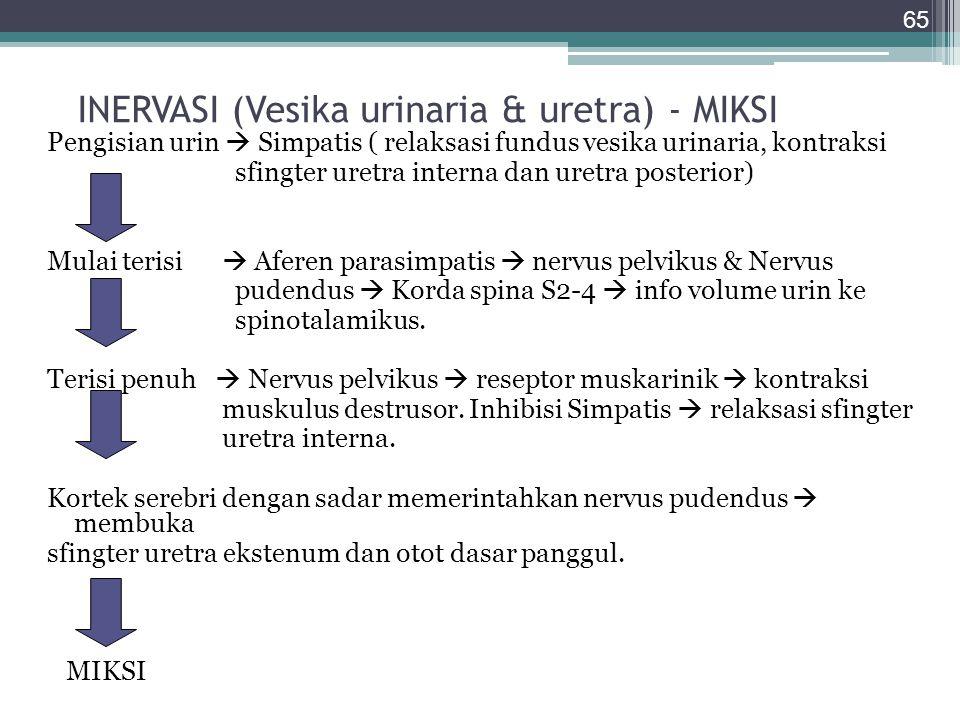 INERVASI (Vesika urinaria & uretra) - MIKSI Pengisian urin  Simpatis ( relaksasi fundus vesika urinaria, kontraksi sfingter uretra interna dan uretra