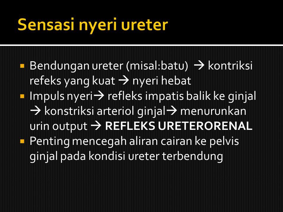  Bendungan ureter (misal:batu)  kontriksi refeks yang kuat  nyeri hebat  Impuls nyeri  refleks impatis balik ke ginjal  konstriksi arteriol ginjal  menurunkan urin output  REFLEKS URETERORENAL  Penting mencegah aliran cairan ke pelvis ginjal pada kondisi ureter terbendung