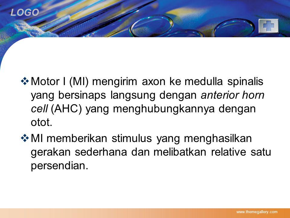 LOGO  Motor I (MI) mengirim axon ke medulla spinalis yang bersinaps langsung dengan anterior horn cell (AHC) yang menghubungkannya dengan otot.  MI