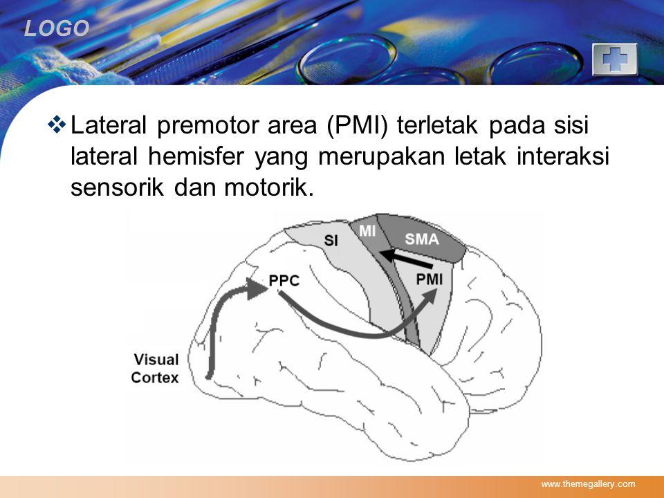 LOGO  Lateral premotor area (PMI) terletak pada sisi lateral hemisfer yang merupakan letak interaksi sensorik dan motorik. www.themegallery.com