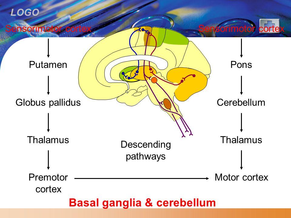 LOGO Basal ganglia & cerebellum Sensorimotor cortex Putamen Globus pallidus Thalamus Premotor cortex Descending pathways Sensorimotor cortex Pons Cere