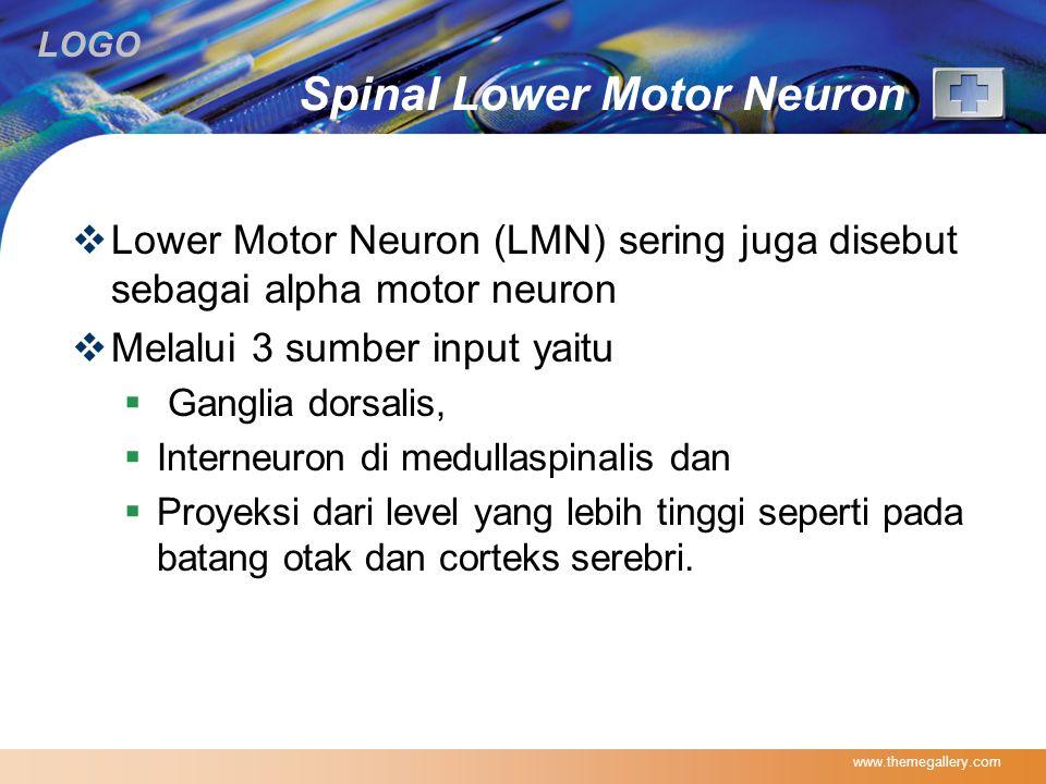 LOGO Spinal Lower Motor Neuron  Lower Motor Neuron (LMN) sering juga disebut sebagai alpha motor neuron  Melalui 3 sumber input yaitu  Ganglia dors