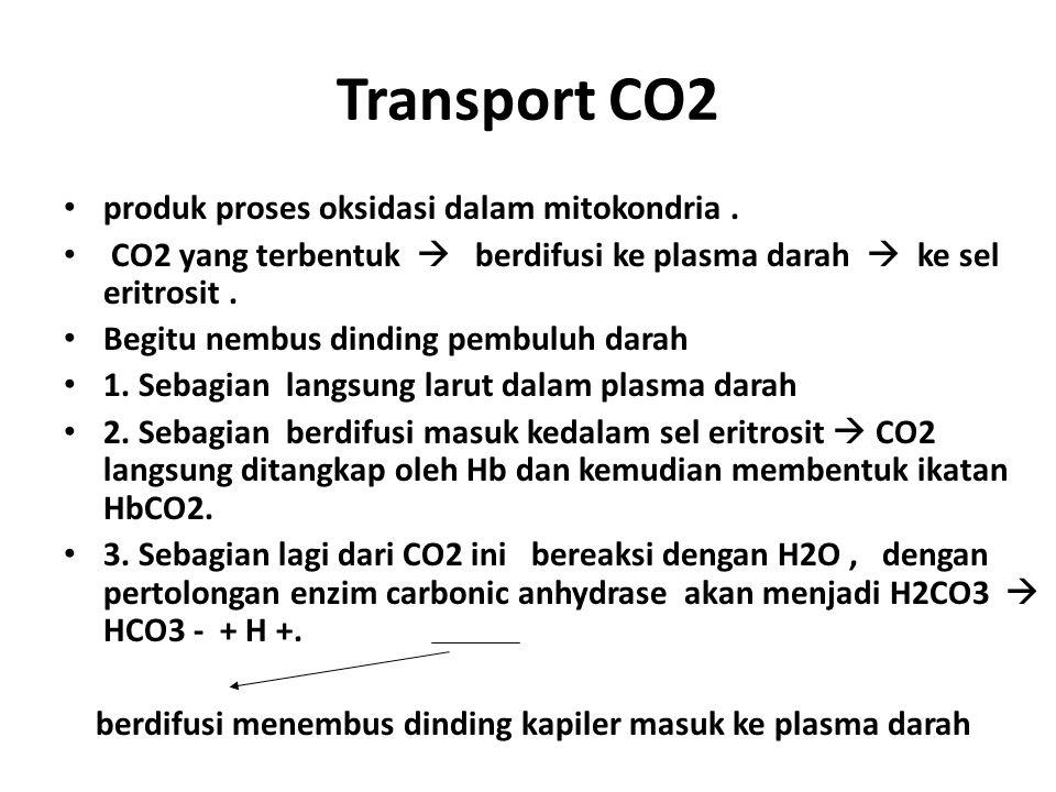 Transport CO2 produk proses oksidasi dalam mitokondria. CO2 yang terbentuk  berdifusi ke plasma darah  ke sel eritrosit. Begitu nembus dinding pembu