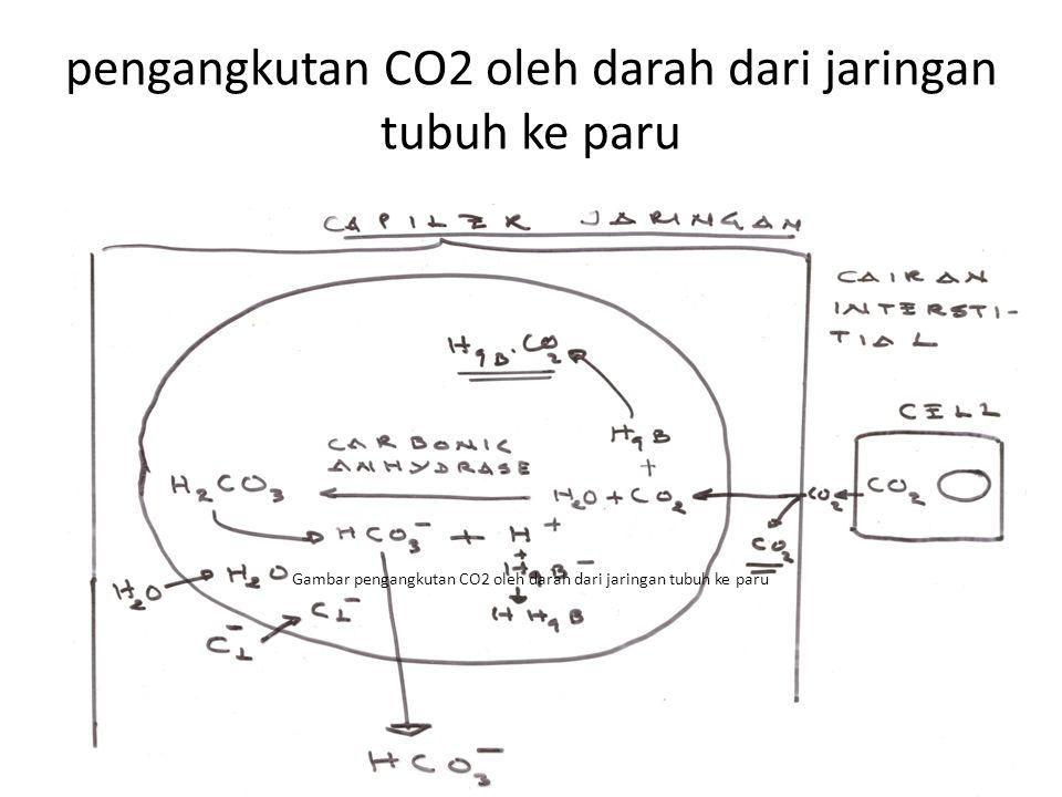 Gambar pengangkutan CO2 oleh darah dari jaringan tubuh ke paru pengangkutan CO2 oleh darah dari jaringan tubuh ke paru