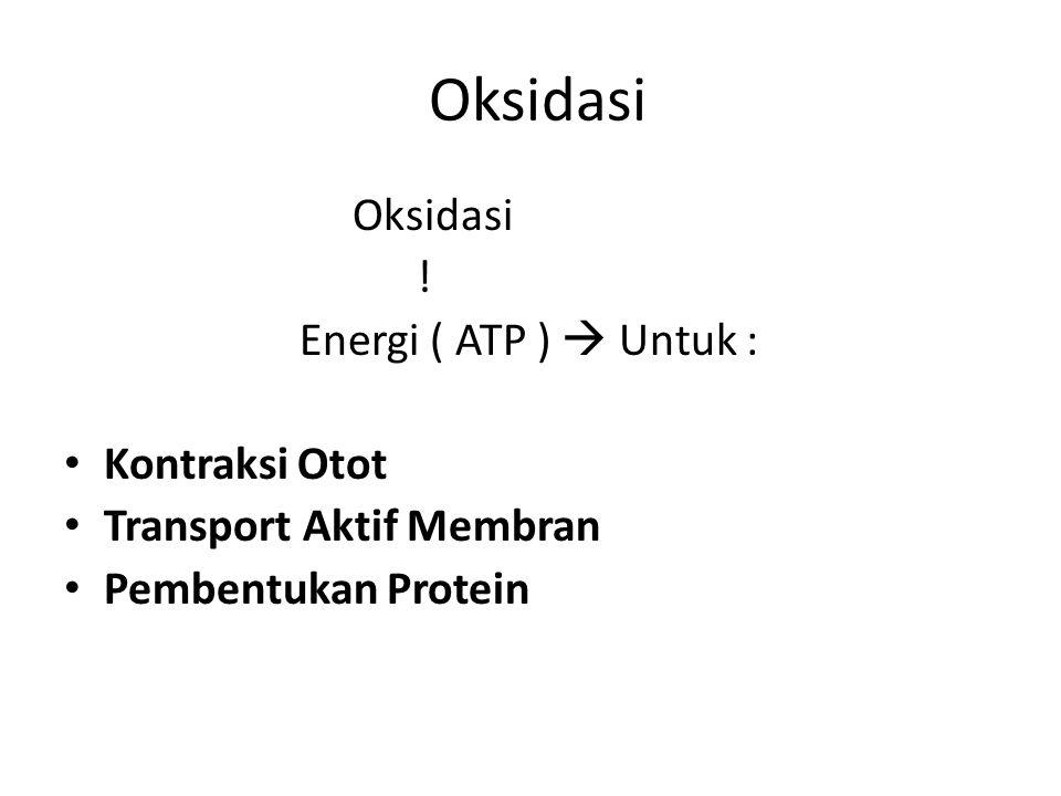 Oksidasi ! Energi ( ATP )  Untuk : Kontraksi Otot Transport Aktif Membran Pembentukan Protein