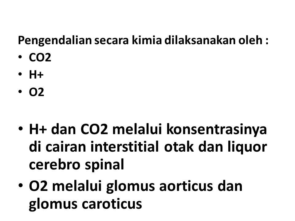 Pengendalian secara kimia dilaksanakan oleh : CO2 H+ O2 H+ dan CO2 melalui konsentrasinya di cairan interstitial otak dan liquor cerebro spinal O2 mel