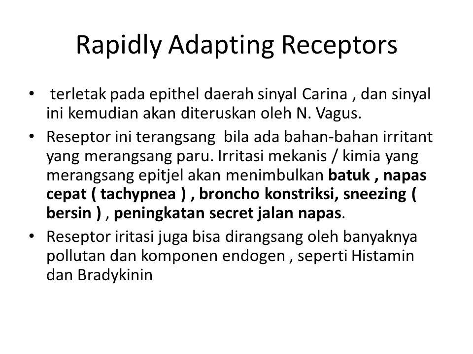 Rapidly Adapting Receptors terletak pada epithel daerah sinyal Carina, dan sinyal ini kemudian akan diteruskan oleh N. Vagus. Reseptor ini terangsang