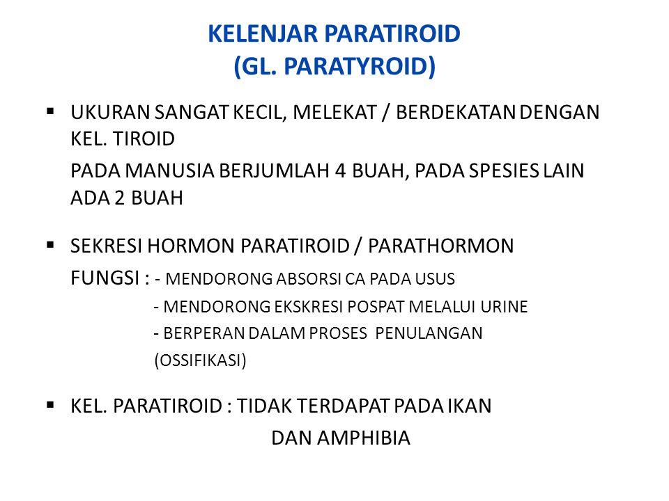 KELENJAR PANKREAS (GL.