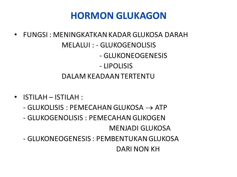 HORMON GLUKAGON FUNGSI : MENINGKATKAN KADAR GLUKOSA DARAH MELALUI : - GLUKOGENOLISIS - GLUKONEOGENESIS - LIPOLISIS DALAM KEADAAN TERTENTU ISTILAH – IS