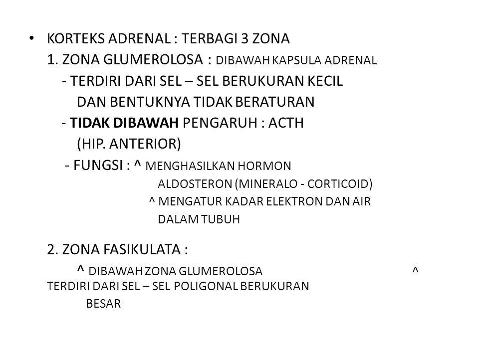 3.ZONA RETIKULARIS : ^ DIBAWAH ZONA FASIKULATA DAN BERBATASAN LANGSUNG DENGAN BAG.