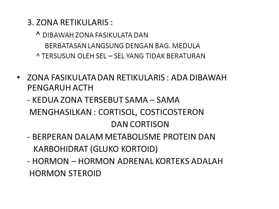3. ZONA RETIKULARIS : ^ DIBAWAH ZONA FASIKULATA DAN BERBATASAN LANGSUNG DENGAN BAG. MEDULA ^ TERSUSUN OLEH SEL – SEL YANG TIDAK BERATURAN ZONA FASIKUL