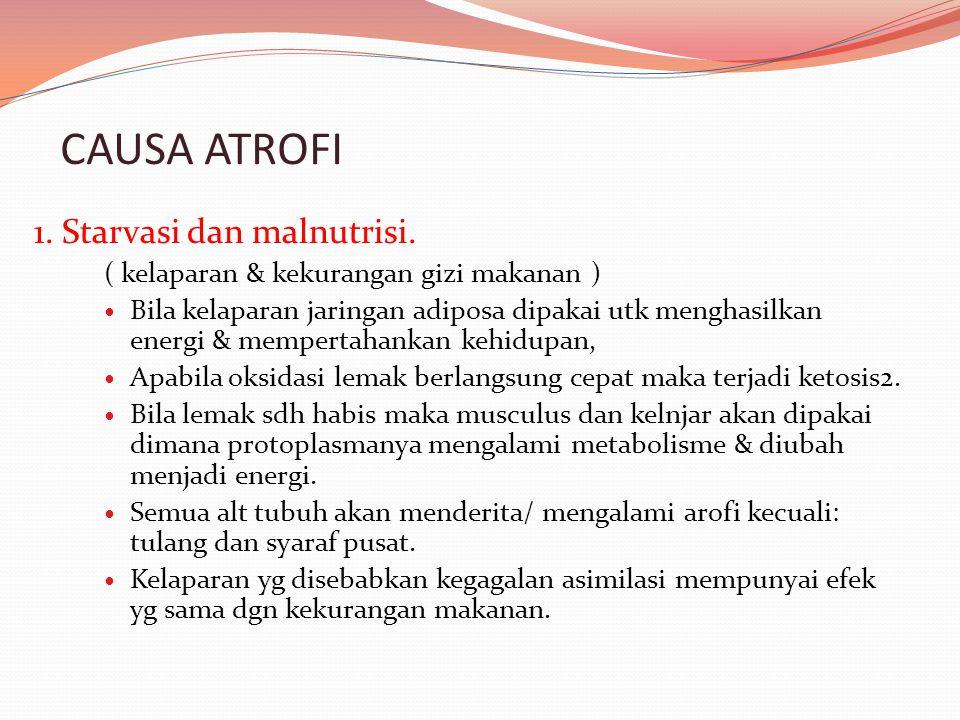 CAUSA ATROFI 1. Starvasi dan malnutrisi. ( kelaparan & kekurangan gizi makanan ) Bila kelaparan jaringan adiposa dipakai utk menghasilkan energi & mem