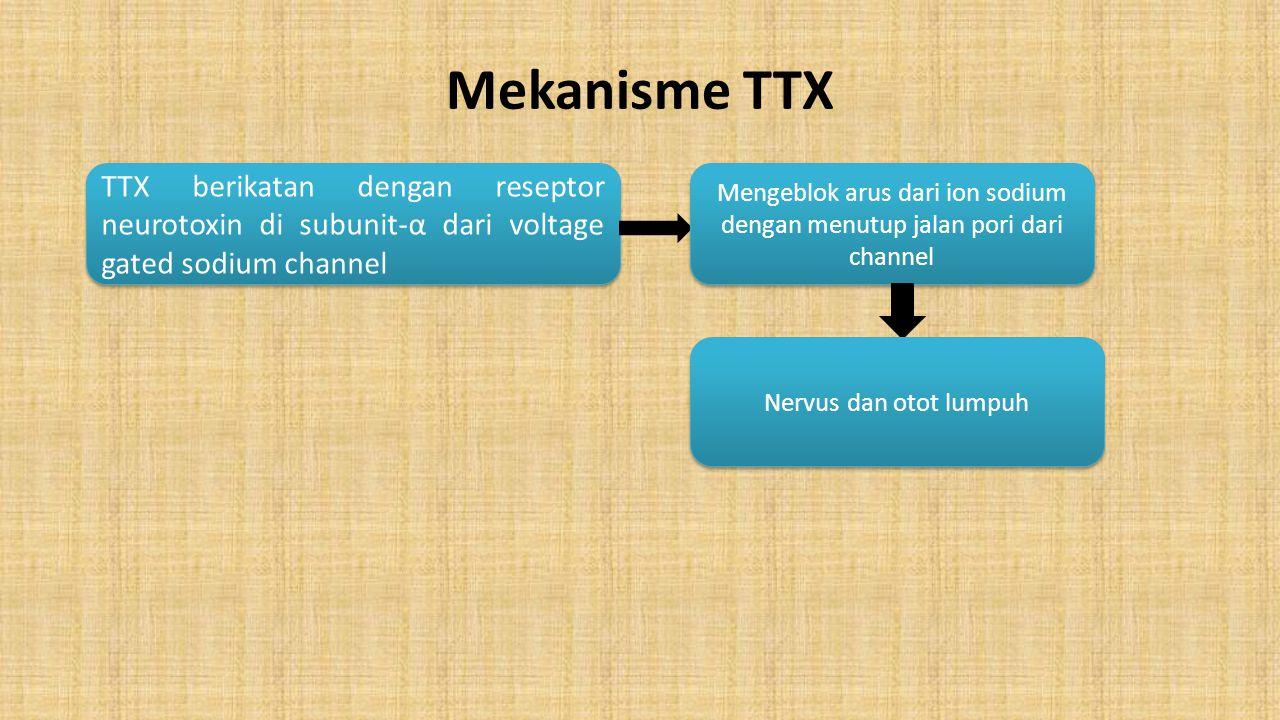 Mekanisme TTX TTX berikatan dengan reseptor neurotoxin di subunit-α dari voltage gated sodium channel Mengeblok arus dari ion sodium dengan menutup ja