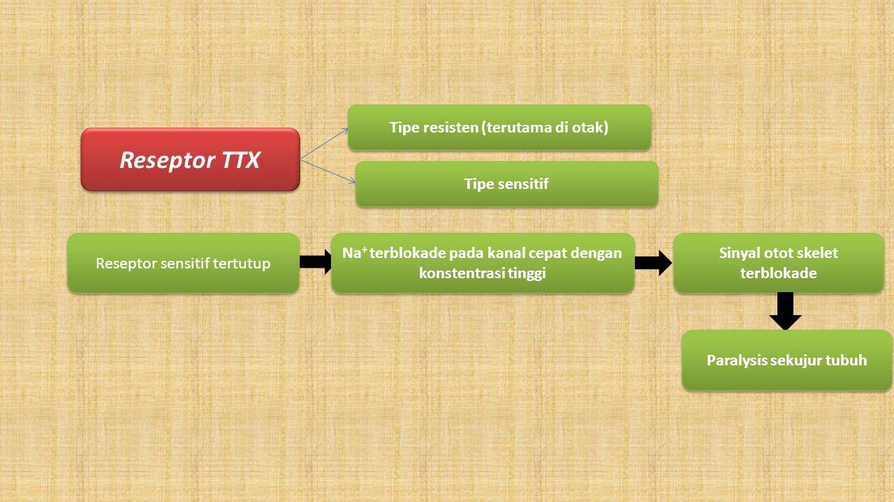 Reseptor TTX Tipe resisten (terutama di otak) Tipe sensitif Reseptor sensitif tertutup Na + terblokade pada kanal cepat dengan konstentrasi tinggi Sin