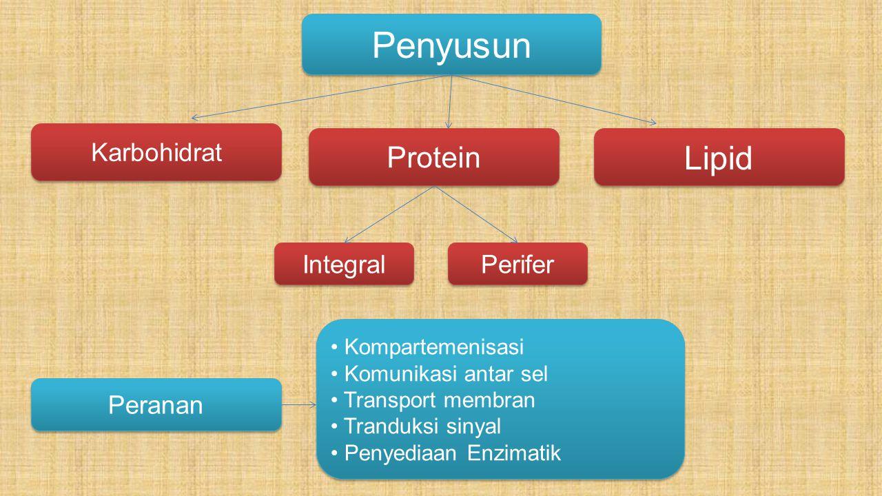 Lipid: Lipid pada membran tersusun atas fosfolipid.