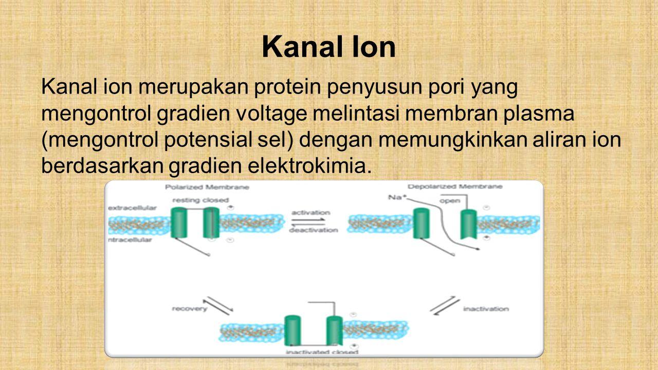 Kanal Ion Kanal ion merupakan protein penyusun pori yang mengontrol gradien voltage melintasi membran plasma (mengontrol potensial sel) dengan memungk