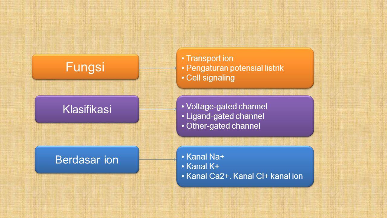 Kanal Na + : Kanal Na tergantung voltage merupakan golongan protein membran yang memediasi masuknya dengan cepat ion Na +, sebagai respon depolarisasi membran untuk membangkitkan potensial aksi dalam sel yang dapat teraktivasi.