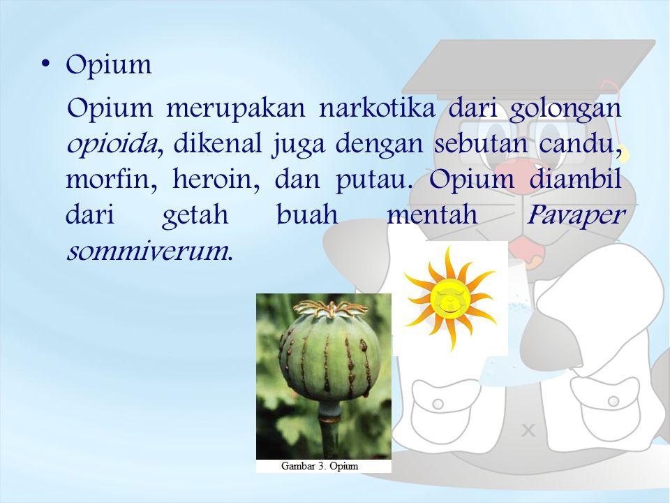 Opium Opium merupakan narkotika dari golongan opioida, dikenal juga dengan sebutan candu, morfin, heroin, dan putau. Opium diambil dari getah buah men