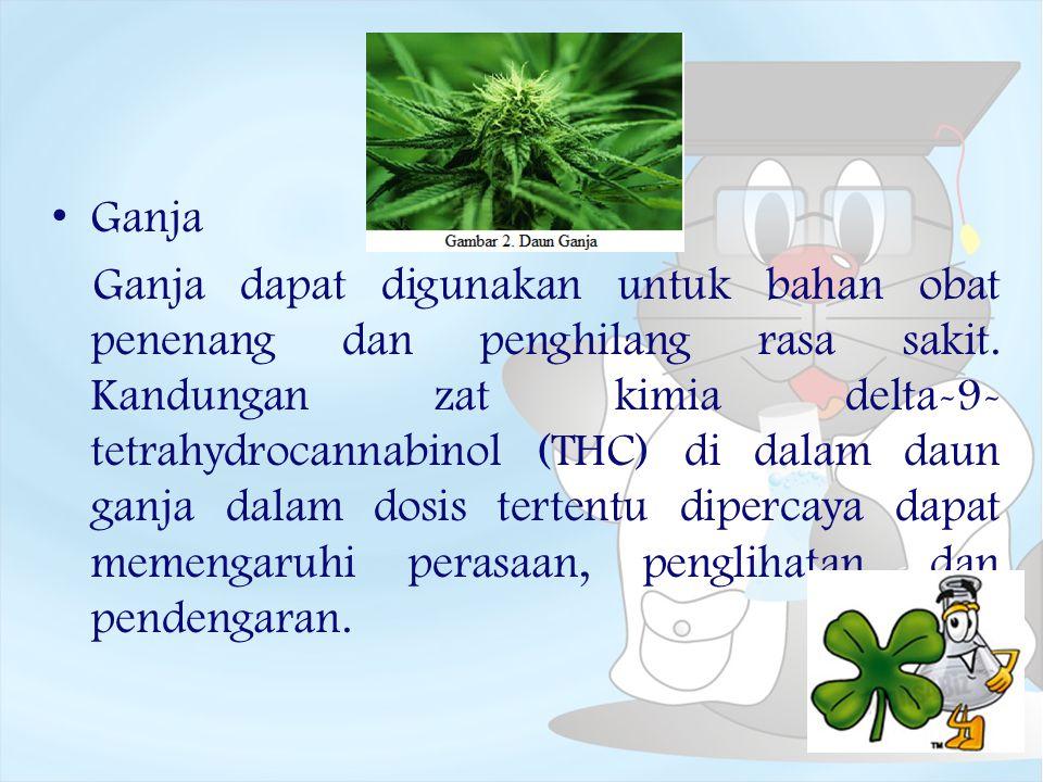 Ganja Ganja dapat digunakan untuk bahan obat penenang dan penghilang rasa sakit. Kandungan zat kimia delta-9- tetrahydrocannabinol (THC) di dalam daun