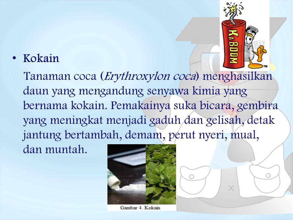 Kokain Tanaman coca (Erythroxylon coca) menghasilkan daun yang mengandung senyawa kimia yang bernama kokain. Pemakainya suka bicara, gembira yang meni
