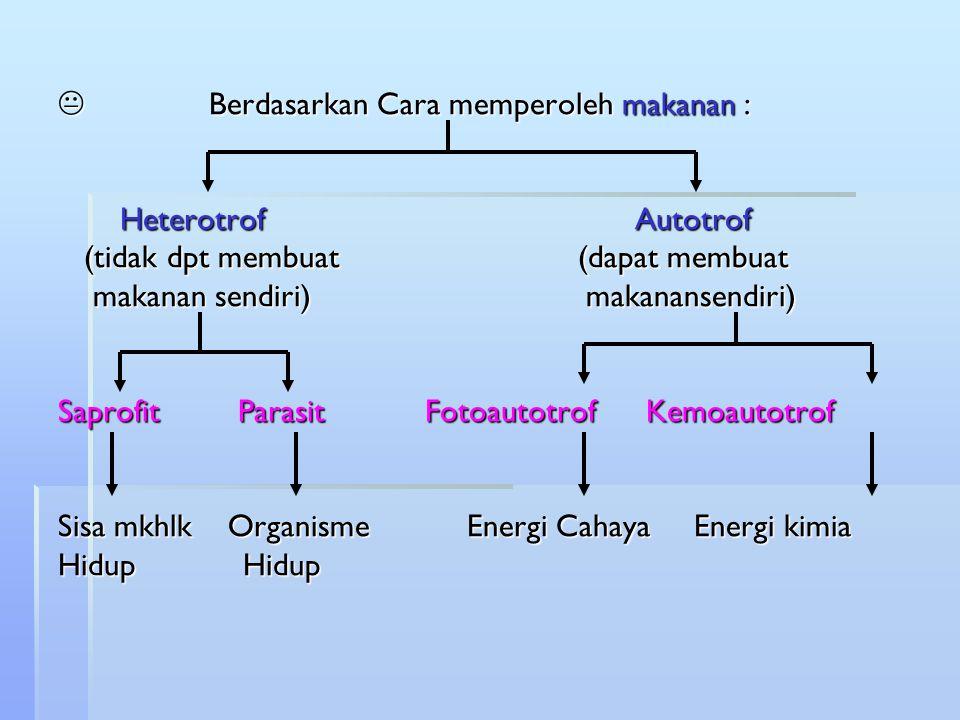  Berdasarkan Cara memperoleh makanan : Heterotrof Autotrof (tidak dpt membuat (dapat membuat makanan sendiri) makanansendiri) Saprofit Parasit Fotoau