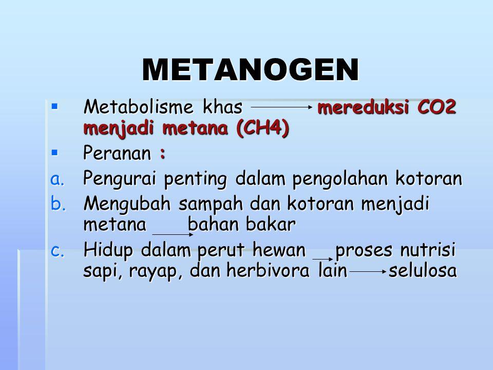 METANOGEN  Metabolisme khas mereduksi CO2 menjadi metana (CH4)  Peranan : a.Pengurai penting dalam pengolahan kotoran b.Mengubah sampah dan kotoran