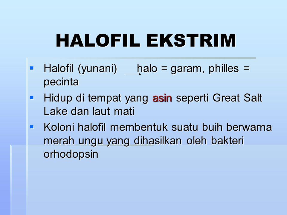 HALOFIL EKSTRIM  Halofil (yunani) halo = garam, philles = pecinta  Hidup di tempat yang asin seperti Great Salt Lake dan laut mati  Koloni halofil