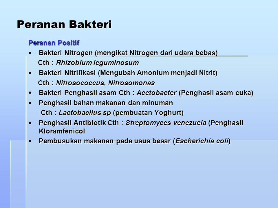 Peranan Bakteri Peranan Positif  Bakteri Nitrogen (mengikat Nitrogen dari udara bebas) Cth : Rhizobium leguminosum Cth : Rhizobium leguminosum  Bakt