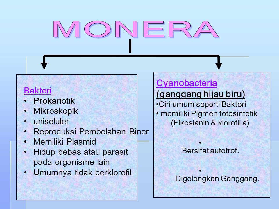 Bakteri a. Struktur tubuh
