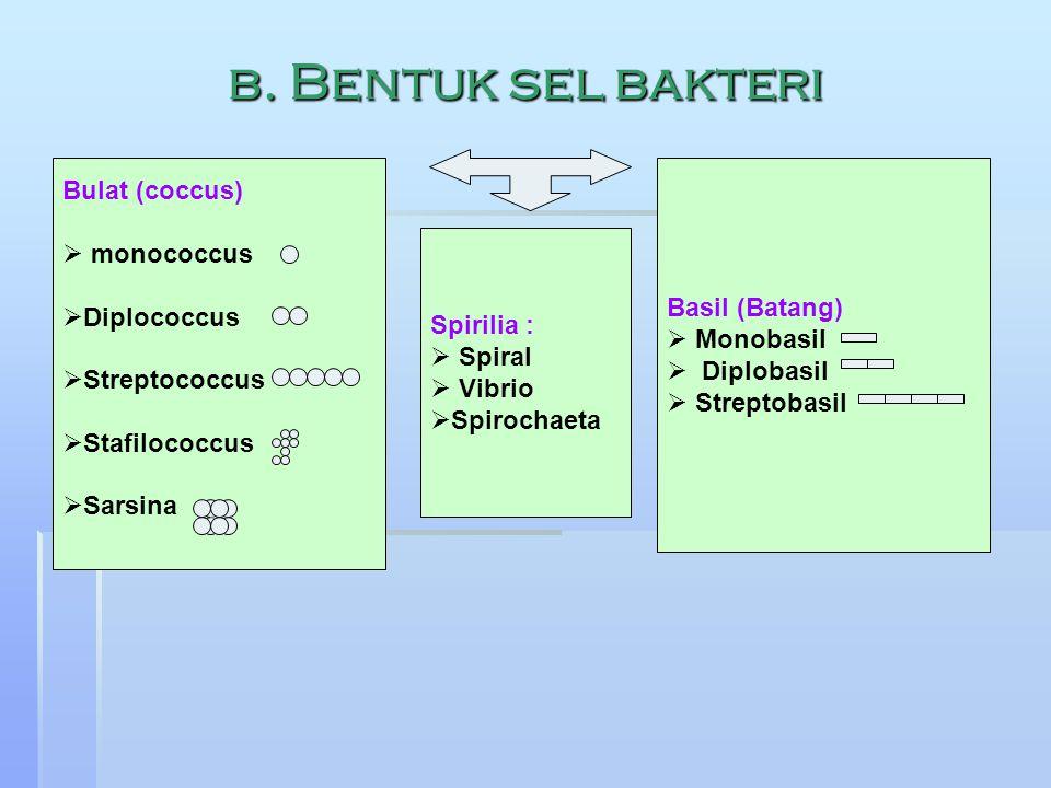 b. Bentuk sel bakteri Bulat (coccus)  monococcus  Diplococcus  Streptococcus  Stafilococcus  Sarsina Basil (Batang)  Monobasil  Diplobasil  St