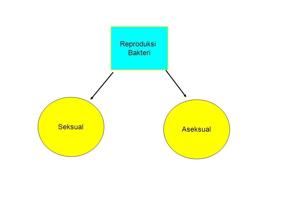 Reproduksi Bakteri Seksual Aseksual