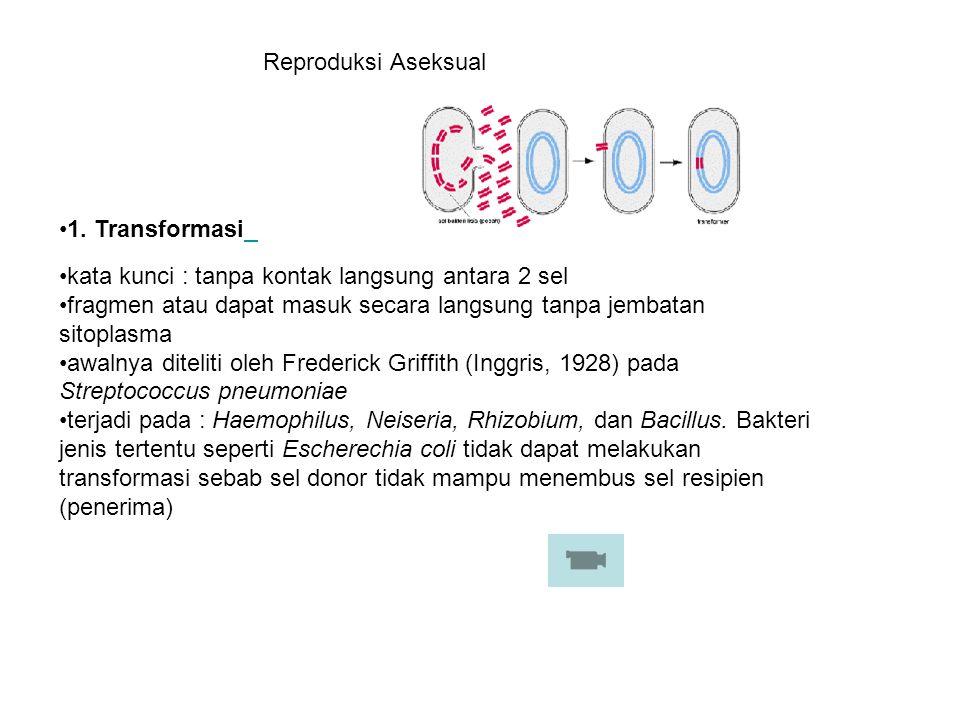 1. Transformasi kata kunci : tanpa kontak langsung antara 2 sel fragmen atau dapat masuk secara langsung tanpa jembatan sitoplasma awalnya diteliti ol