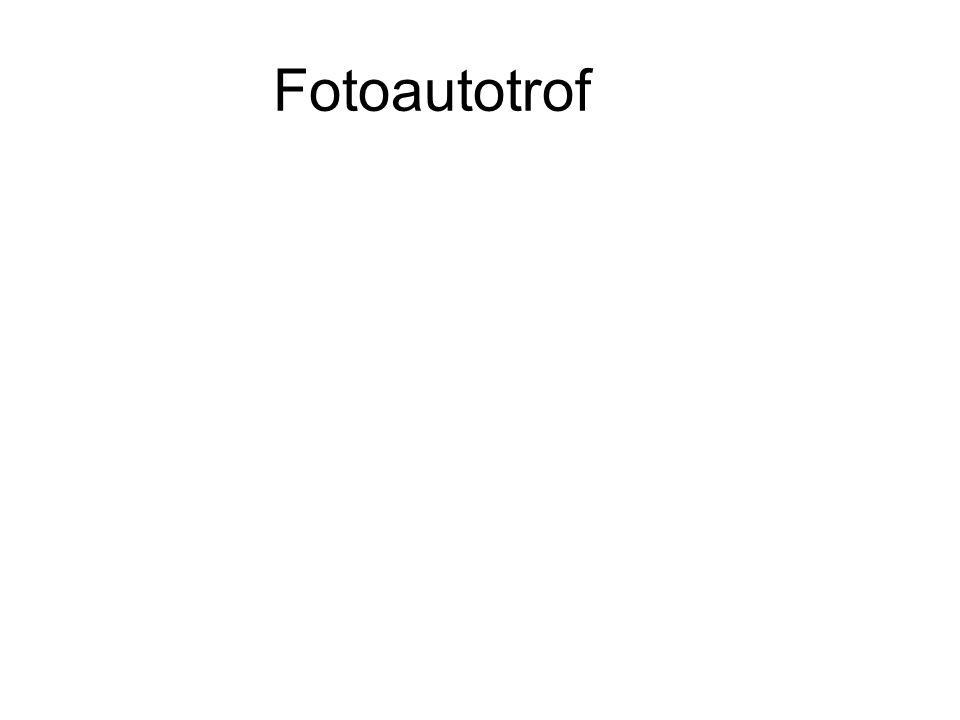 Fotoautotrof