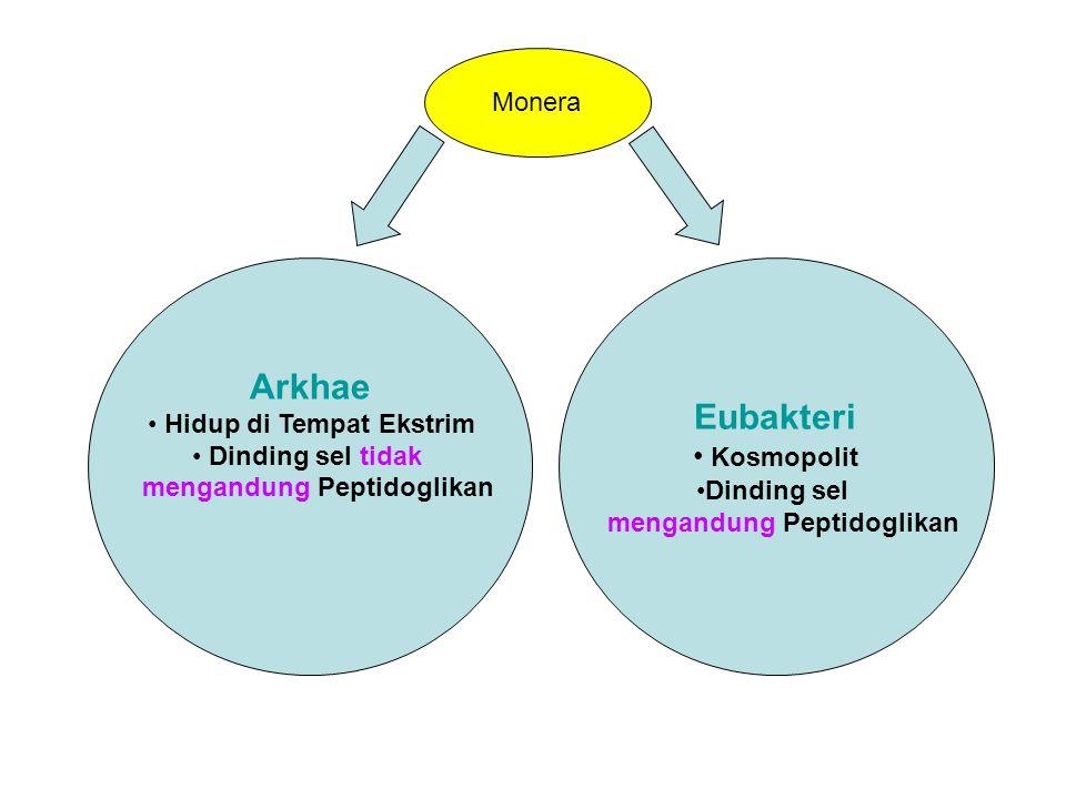 Monera Arkhae Hidup di Tempat Ekstrim Dinding sel tidak Dinding sel tidak mengandung Peptidoglikan Eubakteri Kosmopolit Kosmopolit Dinding sel mengandung Peptidoglikan