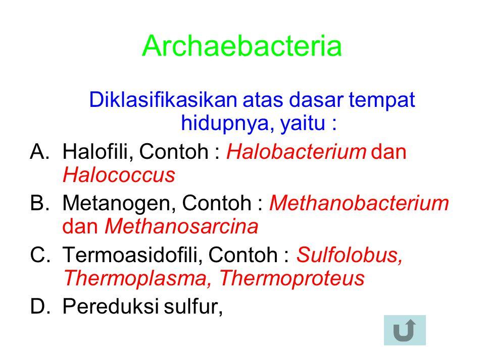 Archaebacteria Diklasifikasikan atas dasar tempat hidupnya, yaitu : A.Halofili, Contoh : Halobacterium dan Halococcus B.Metanogen, Contoh : Methanobacterium dan Methanosarcina C.Termoasidofili, Contoh : Sulfolobus, Thermoplasma, Thermoproteus D.Pereduksi sulfur,